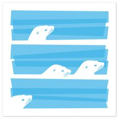 Animal Impressions: Seals Art Prints