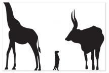 animal prints, educatio... by Sarah Dohm