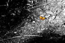 Orange Butterfly by Kristi Mickaliger