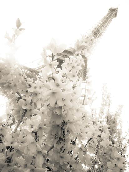art prints - springtime in paris by lindsay ferraris photography