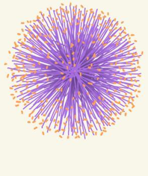 purple puff flower