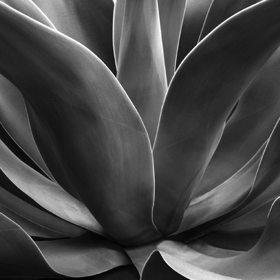 art prints - Cali Succulent by LeeAnn Dougherty
