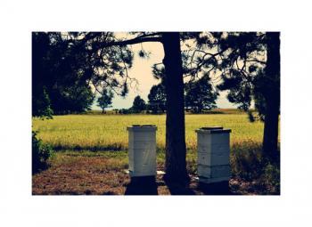 Rural Neigh-BEE-hood