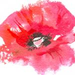 watercolor poppy by Kate Anders