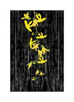 Golden shower tree Art Prints