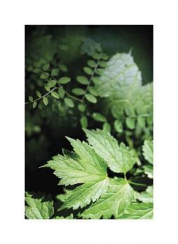 Ferns and Foilage