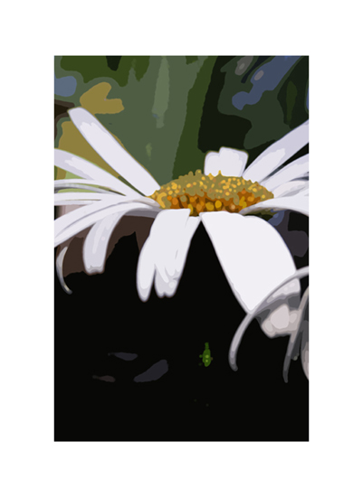 art prints - daisydew by Jennifer Gundling