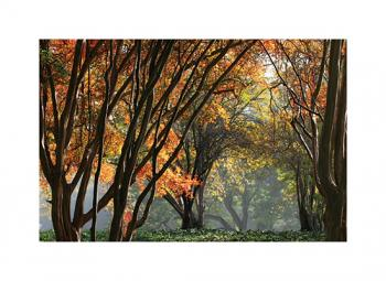 A misty Autumn in Los Angeles Art Prints