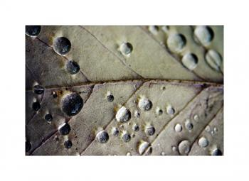 Rain Drops on Leaf Art Prints