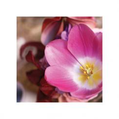 Tulip Centerpiece Art Prints