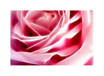 Glowing Rose Art Prints