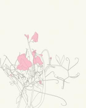 Sweet Pea Blossom Art Prints