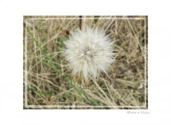 Wish Flower