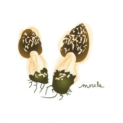 Tiny Morels. Art Prints