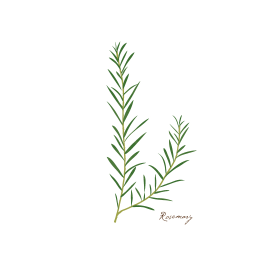 art prints - Rosemary by Becky Nimoy