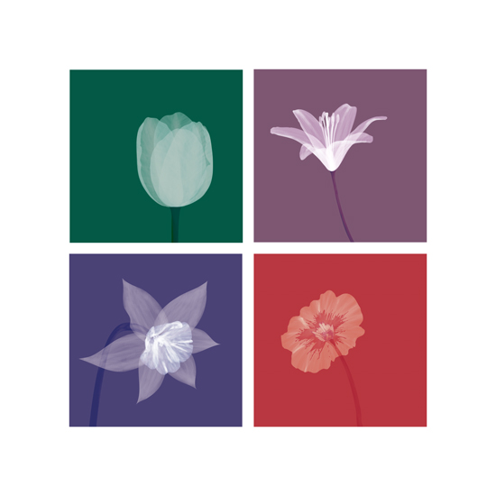 art prints - Four Blooms by Madeline