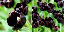Black as Night by Cathryn Toenyes