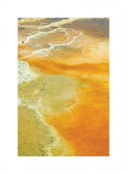 Impressions of Yellowstone 2 Art Prints