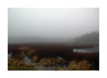 Maine Marsh Art Prints