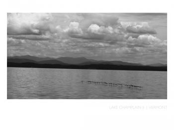 Geese on Lake Champlain Art Prints