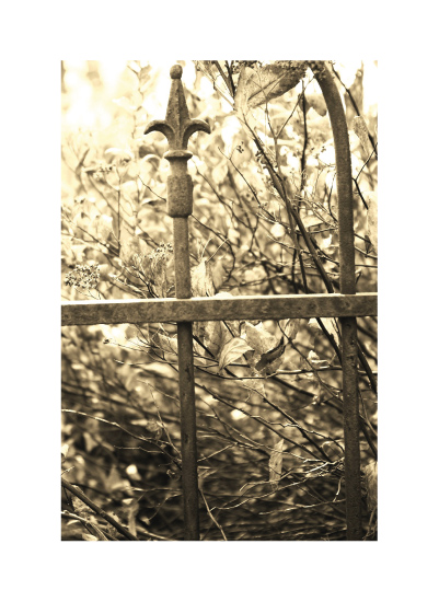 art prints - Iron Fence by Jacquelyn Hardies