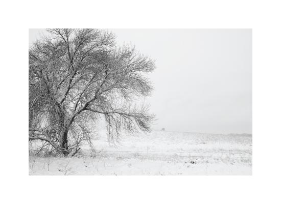 art prints - Snowy Tree by Jacquelyn Hardies