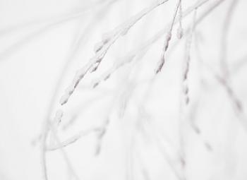 Snow Seeds