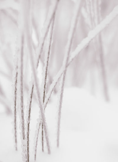 art prints - Snow Grasses by Coco Paperie