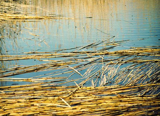 art prints - The Lake by PHEP Design