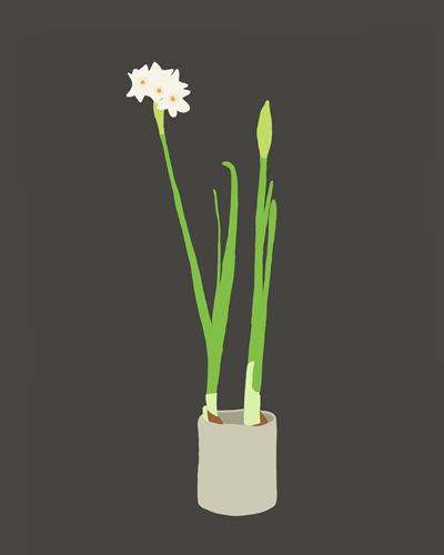 art prints - Paperwhites by Jorey Hurley