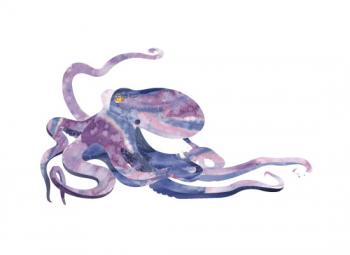 Octopus Art Prints