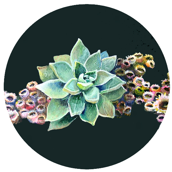 art prints - Succulent by Makewells