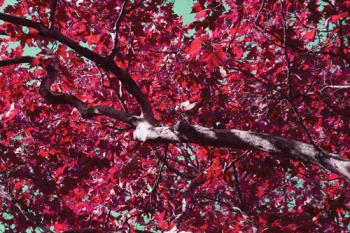 Autumn Goes Pink Art Prints