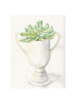 Succulent Still Life Art Prints