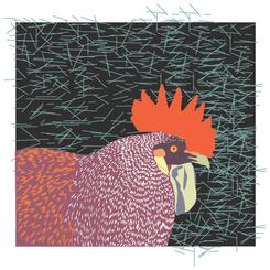 Rooster in a Square