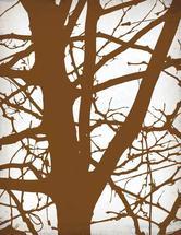 Lofty Tree Trunk by Ankita Kejariwal