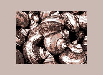 Shell Composition