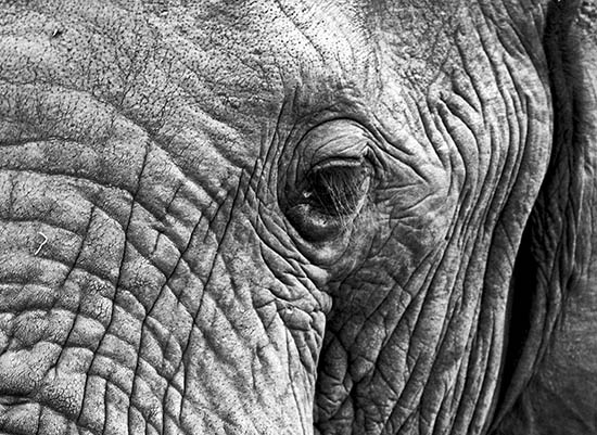 art prints - the ELEPHANT by Gail Schechter