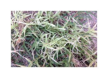 it looks like a plastic..a grass! Art Prints