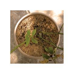 soil & pot