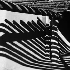 Zebras on the Wall Art Prints