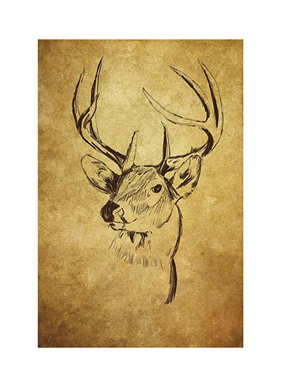 art prints - Deer Head Sketch by Kelly Sikkema