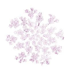 Queen Anne's Lace Delicate Pink Art Prints