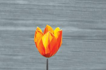 Floating Tulip Art Prints
