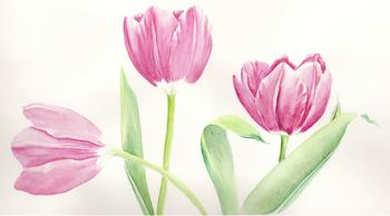 Tulip Trio Art Prints