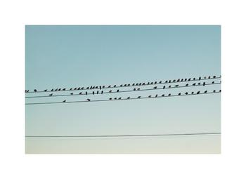 Birds Before Sunset