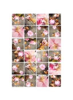 Decomposing Camellias Art Prints