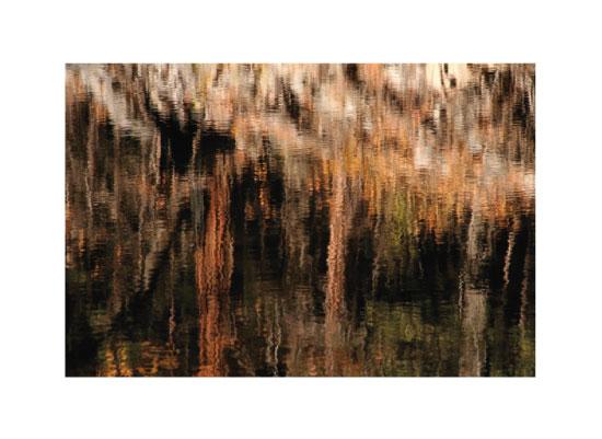 art prints - Autumn Reflections by Pat Jennings