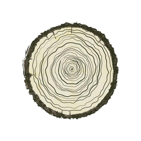 art prints - Wood Slice