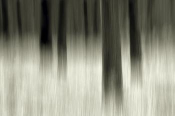 Graphic Trees Sepia
